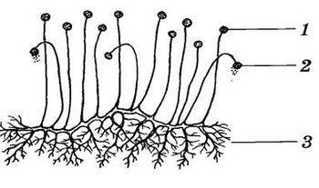 паразиты в горле человека лечение
