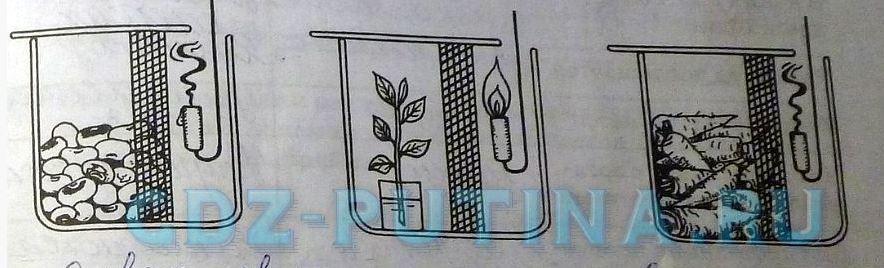 Кислород поддерживает дыхание.