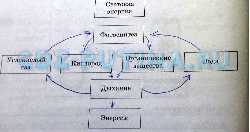 в упрощённой схеме «