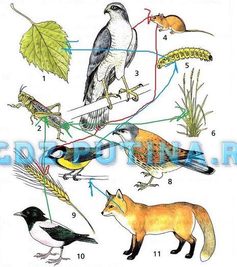 Рассмотрите рисунки 8-10 учебника и запишите изменения происходящие