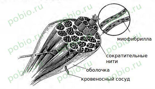 рассмотрите рисунок подпишите названия костей черепа