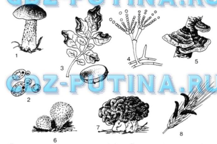 гдз по биологии 7 класс фгос сонин